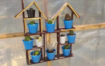 Percantik Rumah dengan Kaktus, Tanaman Primadona saat Pandemi