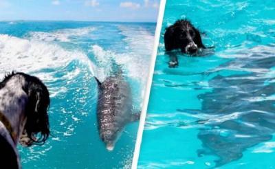 Indahnya Persahabatan Anjing dengan Lumba-Lumba, Sering Renang Bareng