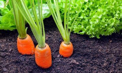 Harga Sayuran Organik Sedang Naik, Simak Cara Berkebun di Rumah Sendiri