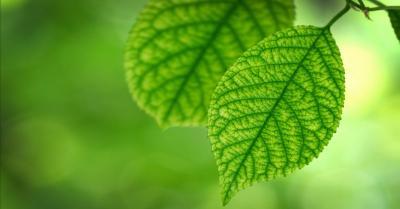 5 Manfaat Terapi Hijau, Salah Satunya Bisa Mengatasi Stres