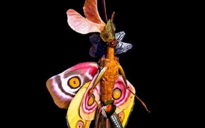 Wow Cantiknya Peri Unik, Terbuat dari Serangga Mati