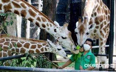 Libur Maulid Nabi, 1.000 Lebih Wisatawan Kunjungi Taman Margasatwa Ragunan
