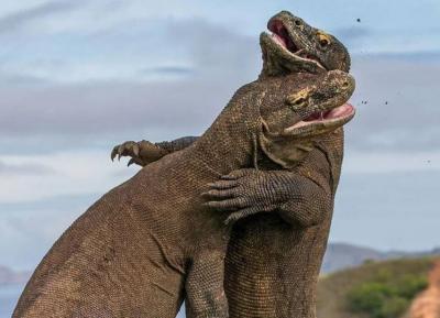 Tutup hingga 2021, Proyek 'Jurassic Park' di Pulau Rinca Sudah 30 Persen