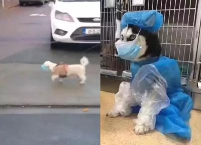 Viral, Anjing Ini Gunakan Masker Cegah Covid-19