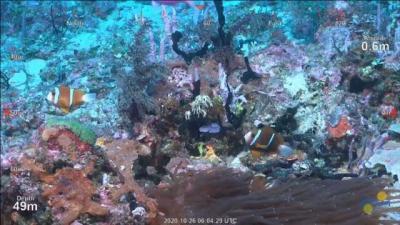 Peneliti Temukan Terumbu Karang Raksasa Setinggi 500 Meter