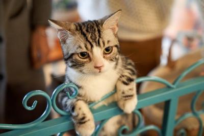 Kucing Mendekat saat Namanya Dipanggil, Ini Penjelasannya