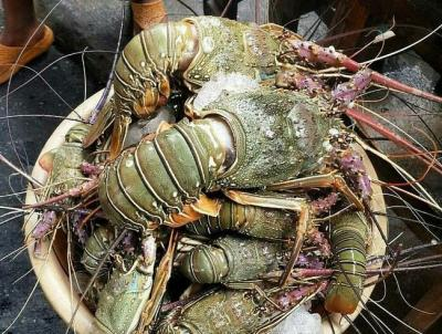 5 Jenis Lobster yang Hidup di Perairan Indonesia, Harganya Bisa Sampai Jutaan!