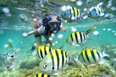 4 Spot Snorkeling Terbaik di Yogyakarta, Pantai Wediombo hingga Sadranan