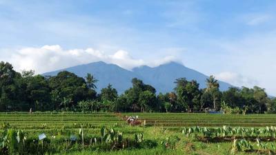 Persawahan Ciharashas Bogor Siap Disulap Jadi Objek Wisata Senilai Rp2,8 Miliar