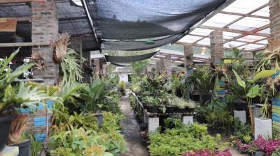Berkunjung ke Kampung Wisata Sewu Kembang, Surganya Tanaman Hias