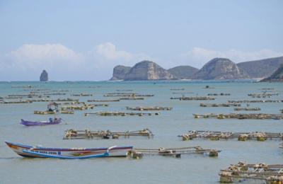 Ekspor Benih Lobster Dihentikan karena Tidak Untungkan Negara
