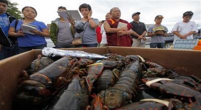 Negara Tidak Diuntungkan, Ekspor Benih Lobster Dihentikan