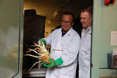Hashim Djojohadikusumo Buka-bukaan soal Ekspor Benih Lobster