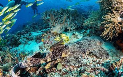 Sabet Penghargaan Destinasi Selam Terbaik Dunia, Ini 5 Spot Diving Mengagumkan di Indonesia