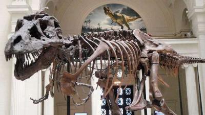 Raja Karnivora, T-Rex Tumbuh Lebih Cepat Dibanding Dinosaurus Lain