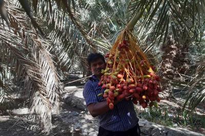 Kisah Aba Dahdah Menjual Kebun Kurma yang Luas dan Surga