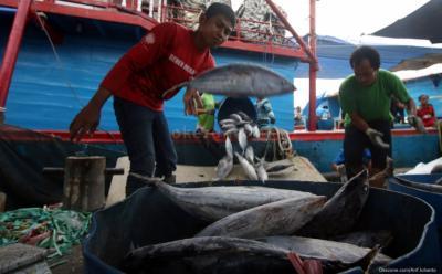 UU Ciptaker, Izin Usaha di Sektor Pengolahan Ikan Lebih Mudah