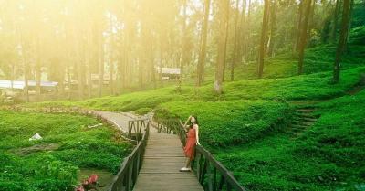 Pesona Hutan Pinus Limpakuwus yang Sempat Viral di TikTok