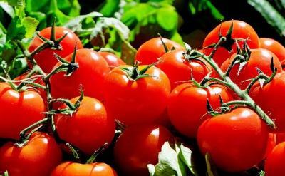 Manfaat Tomat yang Jarang Diketahui, Salah Satunya Tingkatkan Penglihatan Mata