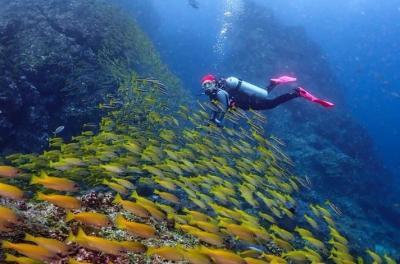 Optimalkan Potensi Wisata Bawah Laut, Babel Gandeng Pihak Swasta