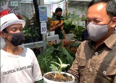 Tanaman Janda Bolong Seharga Rp80 Juta, Bima Arya: Saya Beli 10