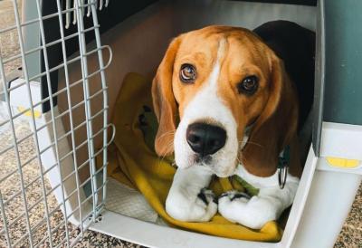 Heboh Petugas Kargo Aniaya Anjing, Pihak Bandara Sochi Minta Maaf
