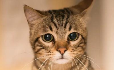 7 Manfaat Memelihara Kucing, Apa Saja?