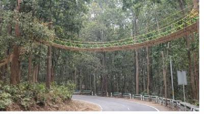 Unik, Ada Jembatan Khusus Reptil untuk Melintasi Jalan Raya