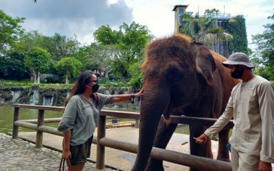 Libur Akhir Tahun, Berkunjung ke Bali Zoo Asyik Loh