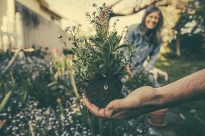Suka Berkebun? Ikuti 7 Langkah Ini Supaya Selalu Aman