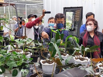 Mentan Kunjungi Pasar Tanaman Hias di Bogor, Takjub Lihat Janda Bolong Rp100 Juta