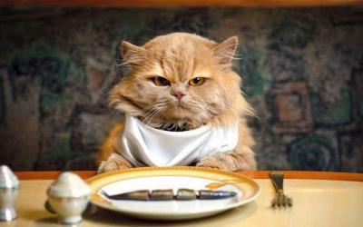 5 Makanan Anda yang Aman Diberikan ke Kucing