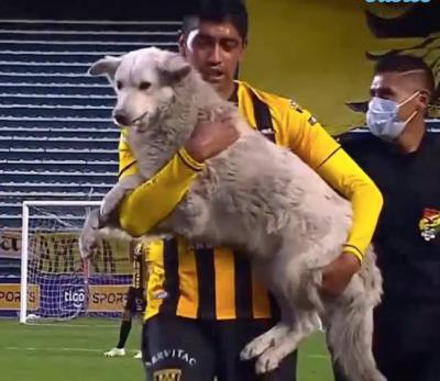 Kisah Anjing Viral Diadopsi Usai Gigit Sepatu dan Ganggu Pertandingan Bola