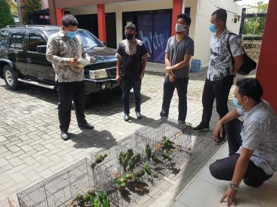 Jual Satwa Dilindungi di Facebook, Oknum ASN Pemprov Riau Ditangkap