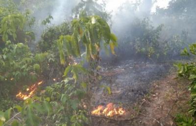 Gawat! Lahan Sekitar Kawasan Wisata Pantai Cemara Maligi Terbakar