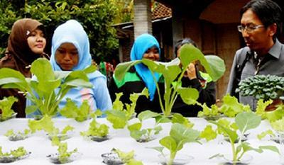 4 Cara Menanam Sayuran Organik
