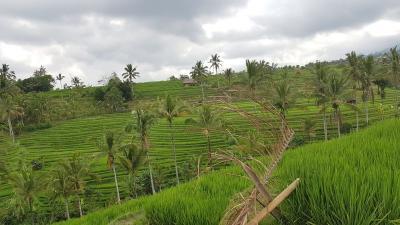 Mentan: Sawah Bisa Selamatkan Ekonomi Indonesia
