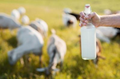Kenali Deretan Khasiat Susu Kambing untuk Kesehatan Tubuh