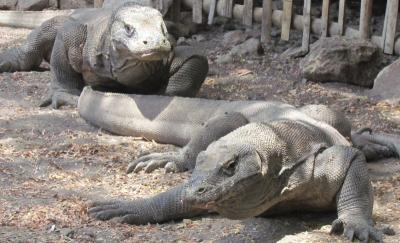Explore Komodo, Pulau Eksotis di Timur Indonesia