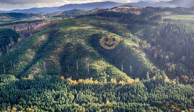 Hutan Ini Punya Bentuk Wajah Tersenyum, Fenomena Alam?
