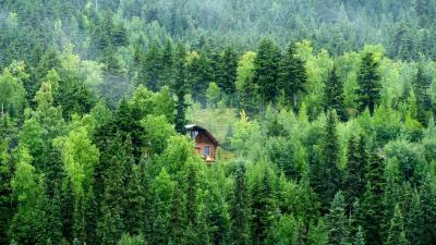 9 Rumah Pohon Terpencil Paling Menakjubkan di Dunia