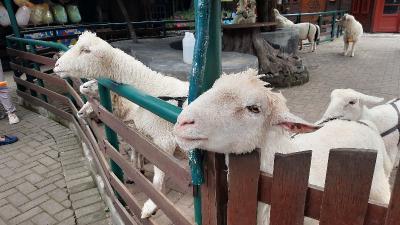Mau Liburan ke Farmhouse Lembang? Ini Harga Tiket dan Cara Menuju Kesana
