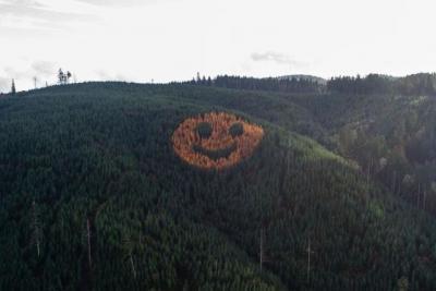 Unik, Kumpulan Pohon di Hutan Ini Membentuk Emotikon Wajah Tersenyum Raksasa