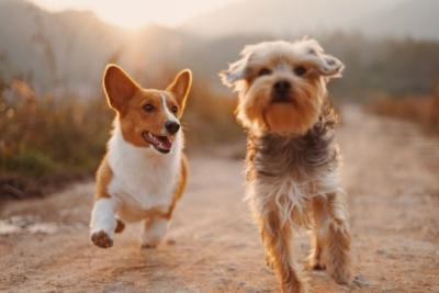 Anjing Sering Mengubur Benda-Benda, Ternyata Ini Alasannya
