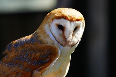 Peneliti Ungkap Penyebab Burung Hantu Mampu Memutar Kepala hingga 270 Derajat