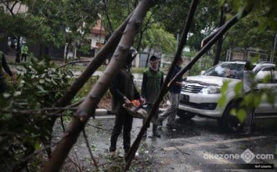 Hujan Deras Disertai Angin Kencang, Pohon Tumbang di Kedoya