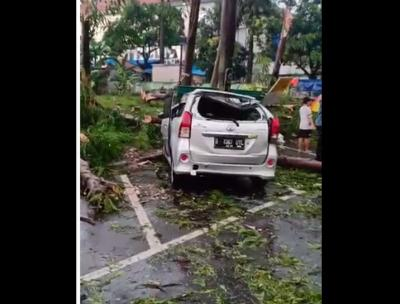Ini Penampakan Pohon Tumbang di Sejumlah Wilayah Jakarta