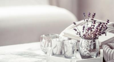 Rekomendasi 5 Tanaman untuk Pemula, Yuk Mulai Berkebun
