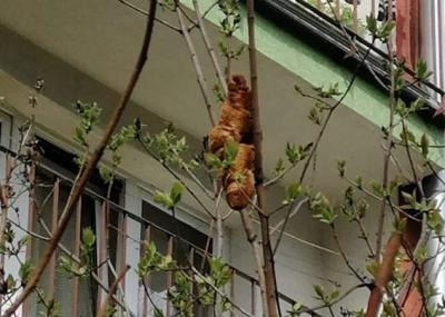 Ada Makhluk Misterius Nangkring di Pohon, Warga Telpon Polisi, Eh Ternyata Hanya Roti