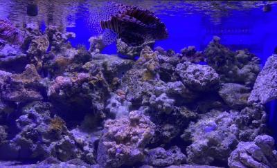 Intip Keseruan Wisata Edukasi Hewan Akuatik & Non-Akuatik di Jakarta Aquarium Safari